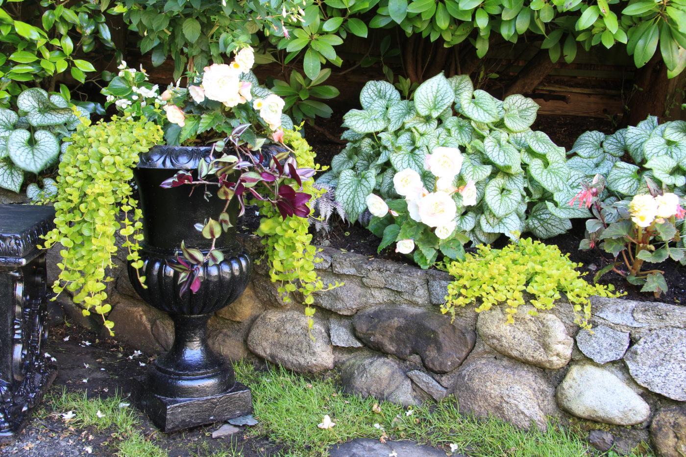 elegant begonia planter
