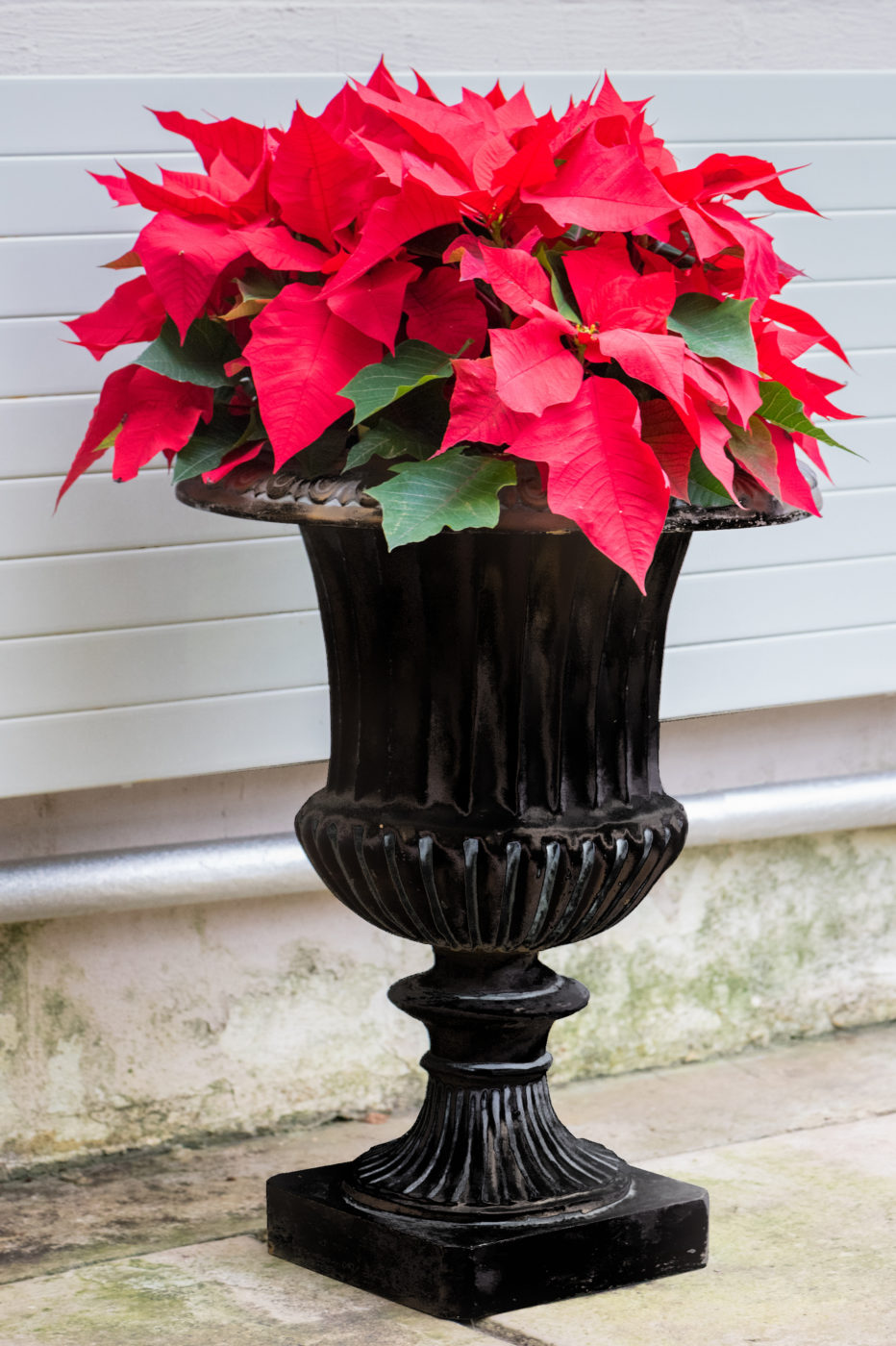 urn planters for flowers